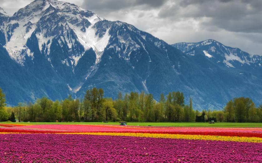 La Canada, pays de neige et de fleurs